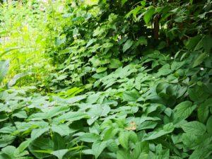 Bitkilerin Birbirleriyle Konuştuğu Kanıtlandı