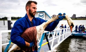 Hollanda'da Çevre Felaketi: Yüzlerce Kus Yakalanarak Temizleniyor