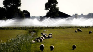 Hollanda'da İlk Kez Cami ve Kilise Görevlileri 'Yağmur Duasına' Çıktı