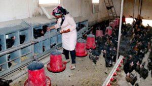 Hollanda'dan Dönüp Çiftlik Kurdu, Siparişlere Yetişemiyor