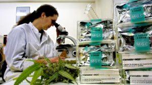 Hollanda'da Uyuşturucu Kaçakçıları Çalıştırmak İçin Kimya Öğrencilerinin Peşine Düşüyor