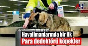 Havalimanlarında bir ilk: Para dedektörü köpekler