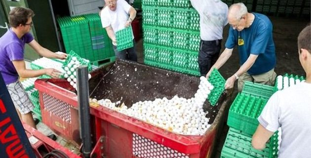 Hollanda'da Kanatlı Hayvan Yetiştiricilerinden 'Zehirli Yumurta' Davası