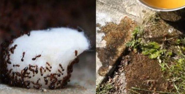 Karıncaları Evden Kovabilmeniz İçin 5 Ucuz Ve Doğal Yöntem