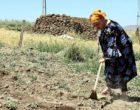 Hollandalı: Köyümü Hollanda'ya tercih ederim